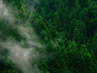 Luftbild Tannenwald