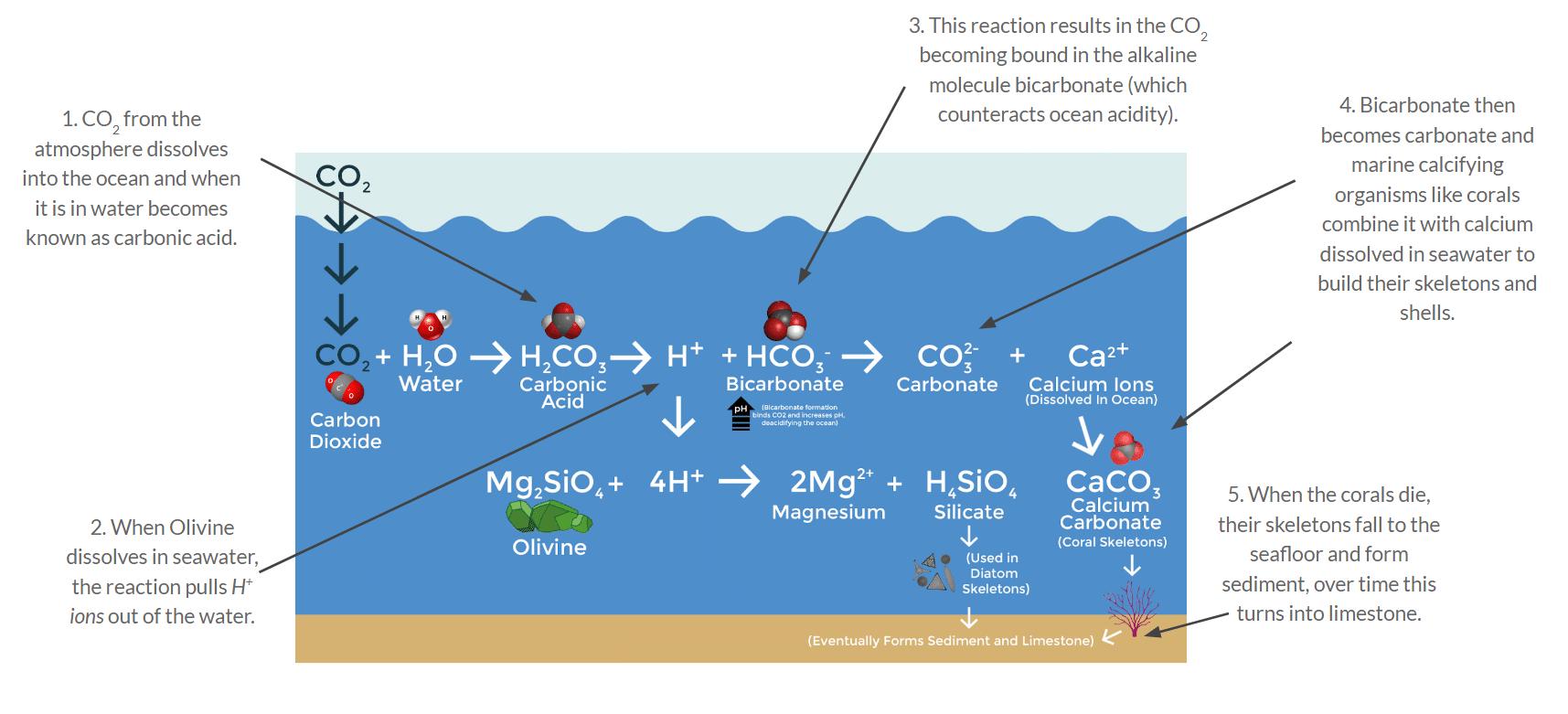 Chemischer Ablauf der Olivin-Verwitterung